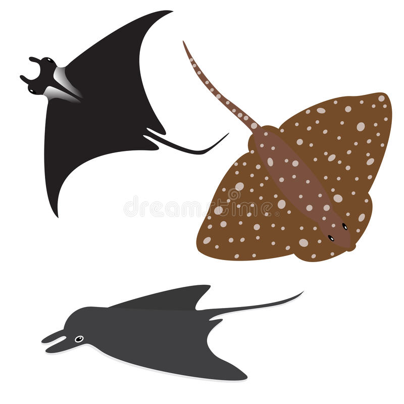 Stingray vector set. Collection of vector stingrays on white vector illustration