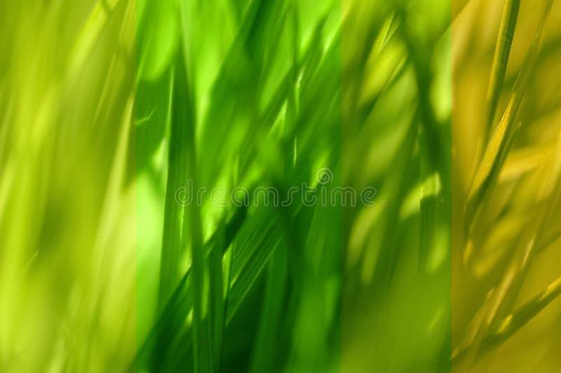 Collection verte de lame photographie stock libre de droits