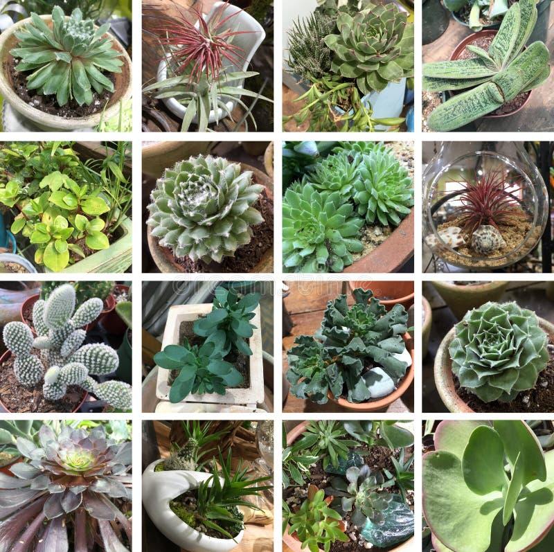 Collection volumineuse et formelle de succulents photographie stock