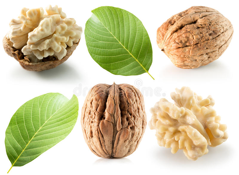 Collection of walnuts isolated on the white background royalty free stock image