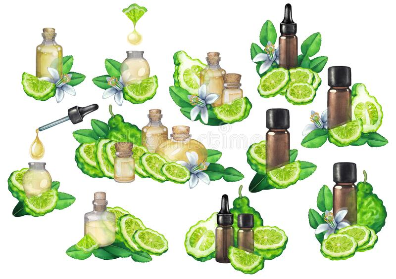 Collection of watercolor bergamot oils surrounded by fruits, leaves and flowers stock photo