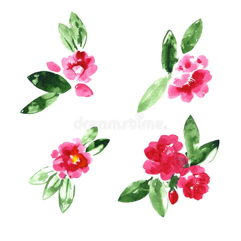Collection of watercolor camellia flowers royalty free illustration