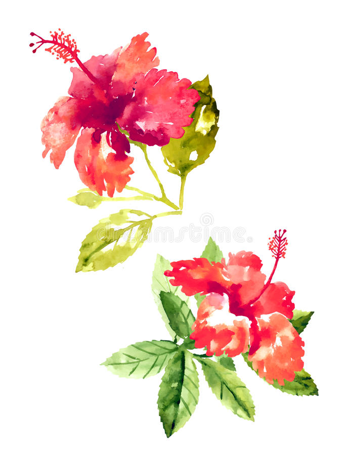 Collection of watercolor hibiscus flowers royalty free illustration