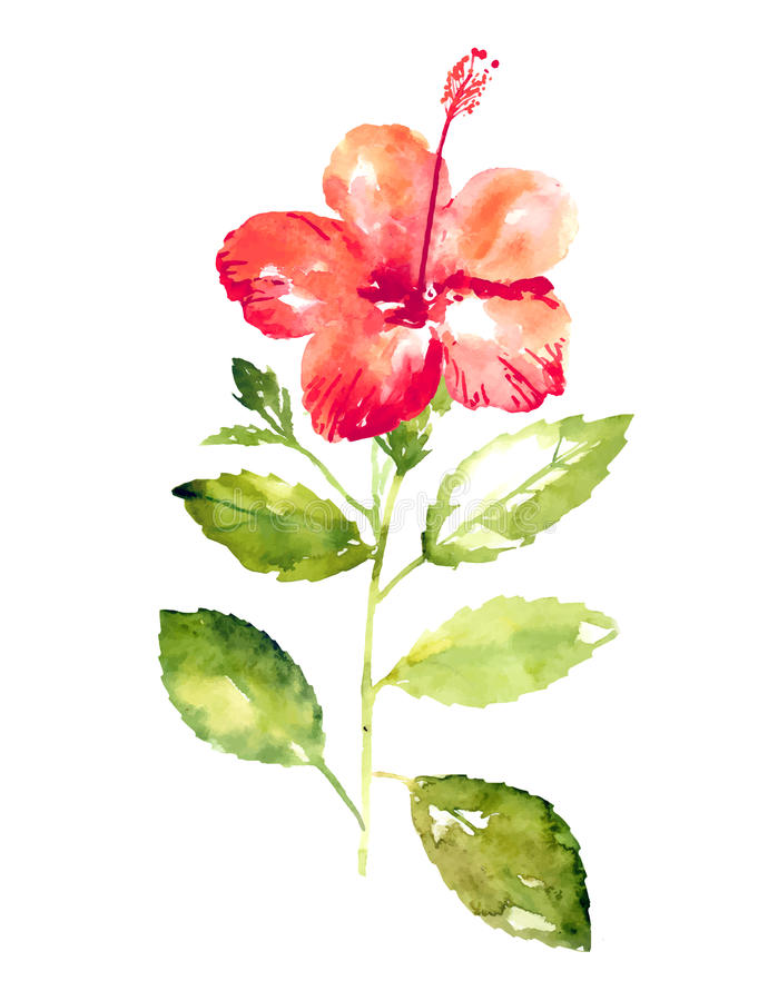 Collection of watercolor hibiscus flowers stock illustration