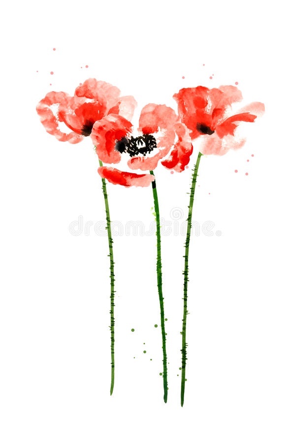Collection of watercolor poppy flowers royalty free illustration