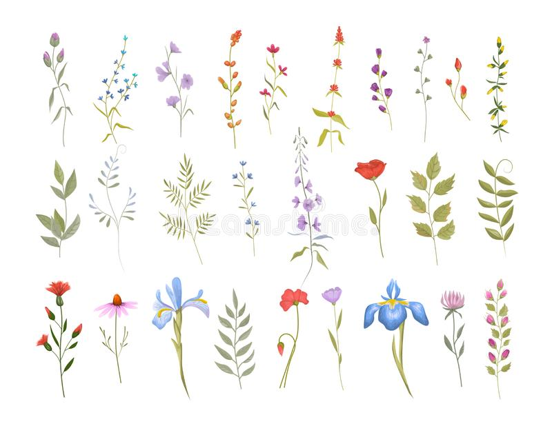 Collection of wild flowers. Set of floral elements vector illustration