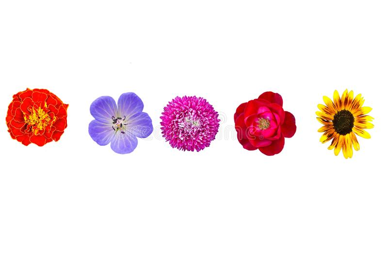 Collection wild and garden flowers isolated on white, top view stock illustration
