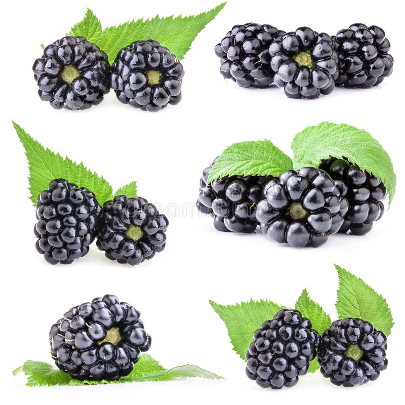 Collections of Blackberry stock images