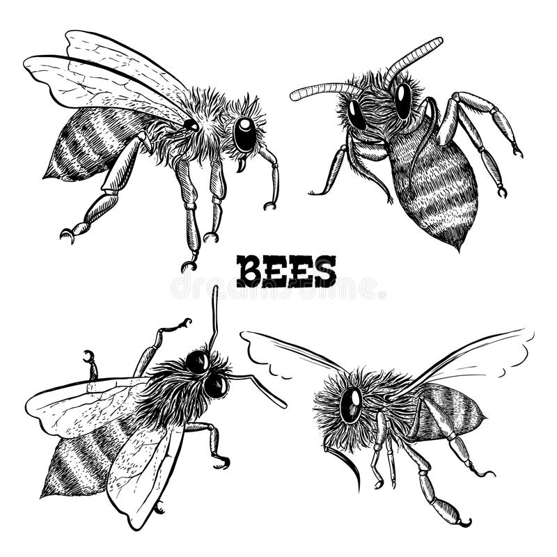 Collections d'icônes d'abeille de miel illustration de vecteur