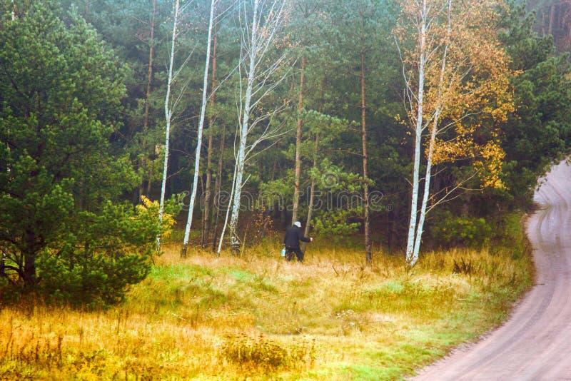 collettore dei funghi (raccoglitrice del fungo) sulla foresta che elimina vicino al sentiero forestale fotografia stock libera da diritti