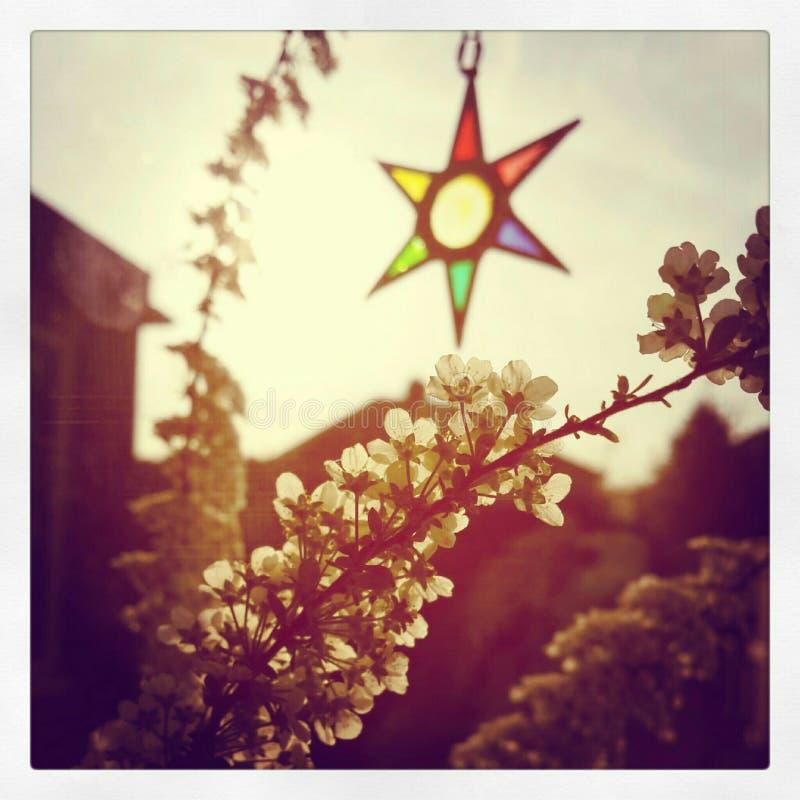 Collettore di sogno con il fiore fotografia stock