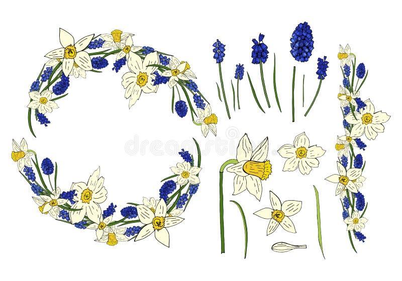 Collezione primaverile con i fiori del narciso e giacinto del topo sui precedenti bianchi Corona della molla del fiore illustrazione di stock