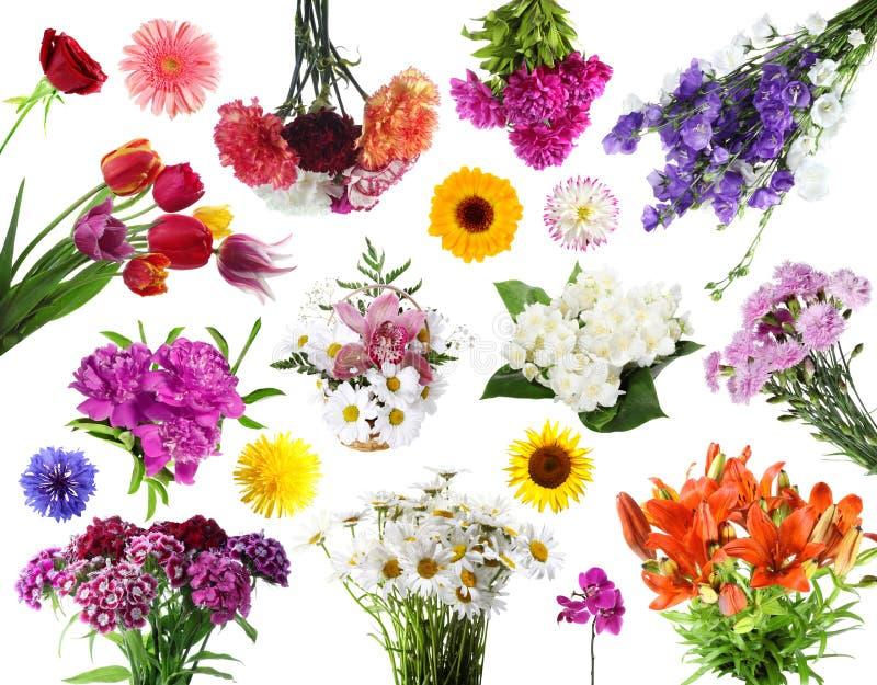 Collezioni di fiori di estate immagini stock libere da diritti
