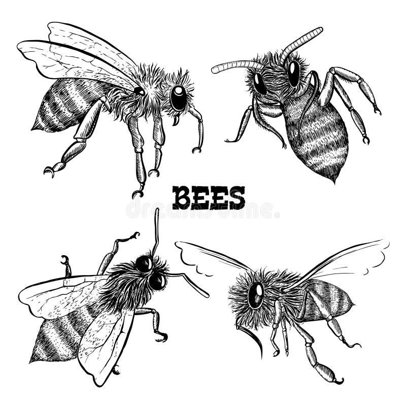 Collezioni di icone dell'ape del miele illustrazione vettoriale