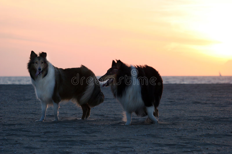 Download Collie stock image. Image of cloudy, friend, reflection - 156571