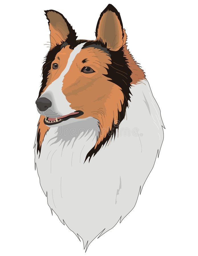 Download Collie stock vector. Illustration of bonce, accent, animal - 8425518