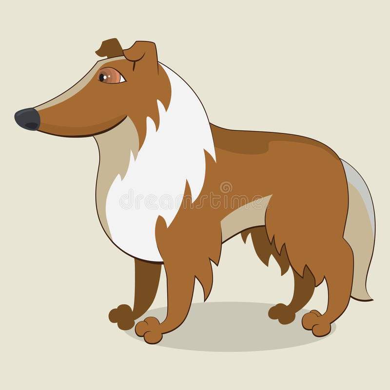 Collie royalty free illustration