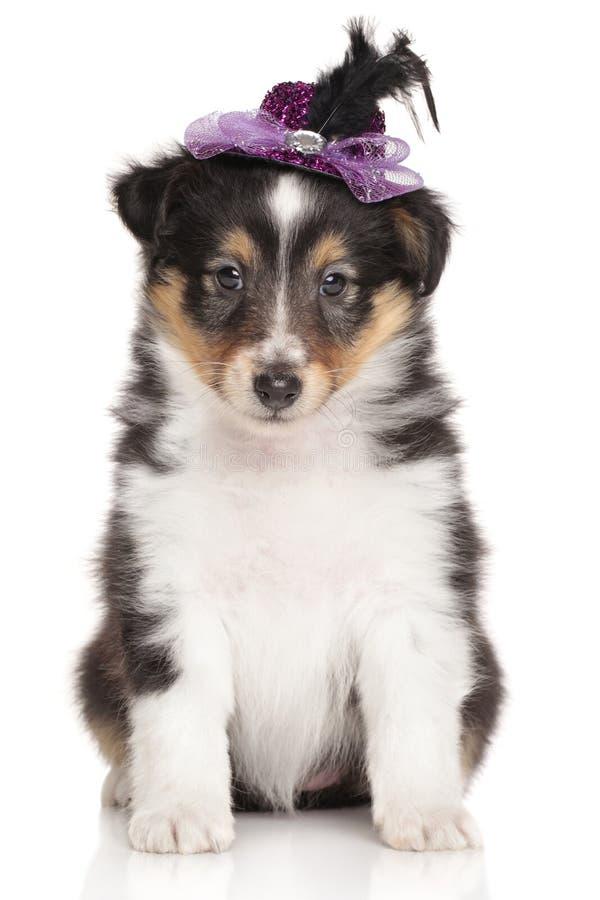 Collie del perrito en el fondo blanco imagen de archivo