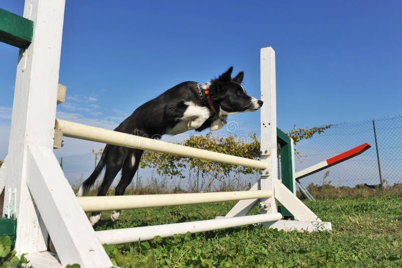 Collie di bordo di salto del cucciolo fotografie stock libere da diritti