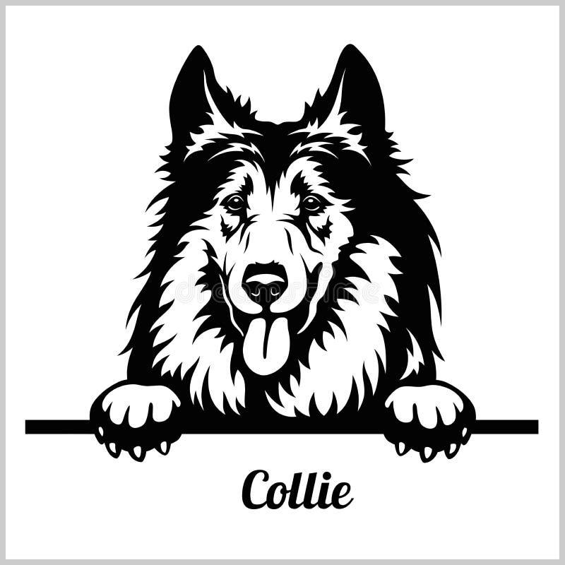 Collie - espreitando cães - cabeça da cara da raça isolada no branco ilustração do vetor