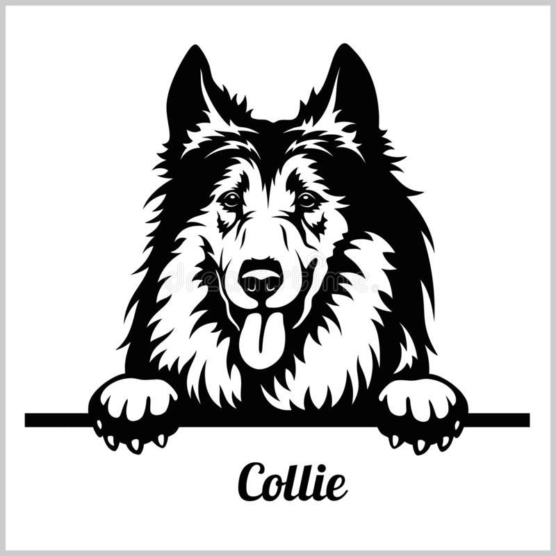 Collie - Peeking Dogs - breed face head isolated on white vector illustration