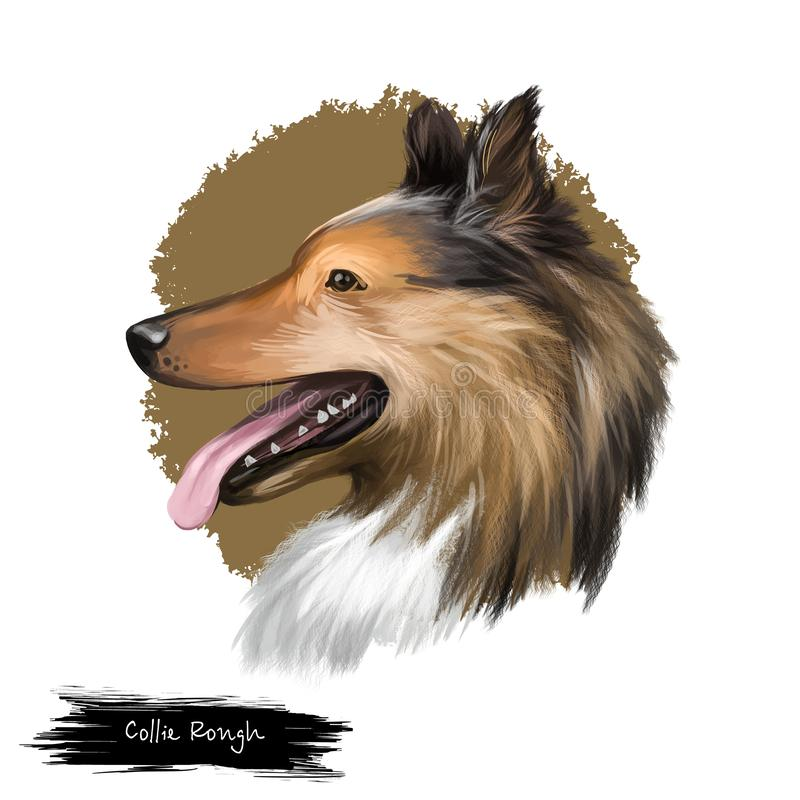 Collie, Rough. Dog breed isolated on white background digital art illustration. Cute pet hand drawn portrait. Graphic clipart design realistic animal stock illustration
