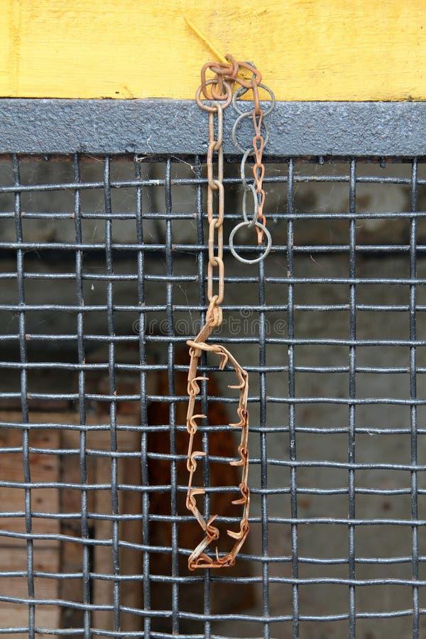 Collier de chien strict en métal sur le fond de trellis en métal photos libres de droits