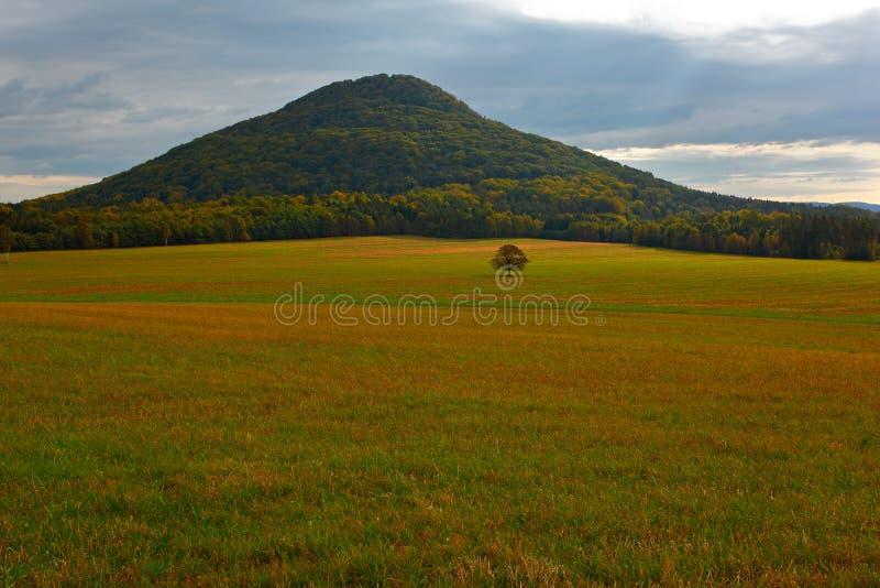 Collina con l'albero del solitario in prato Bello paesaggio Sera in colline con i villaggi, parco nazionale ceco Ceske Svycarsko, immagini stock libere da diritti