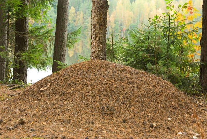 Collina della formica immagine stock