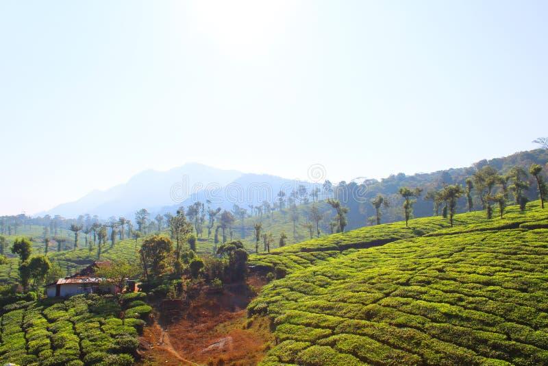 Collina della proprietà del tè verde con la nuvola pulita immagini stock