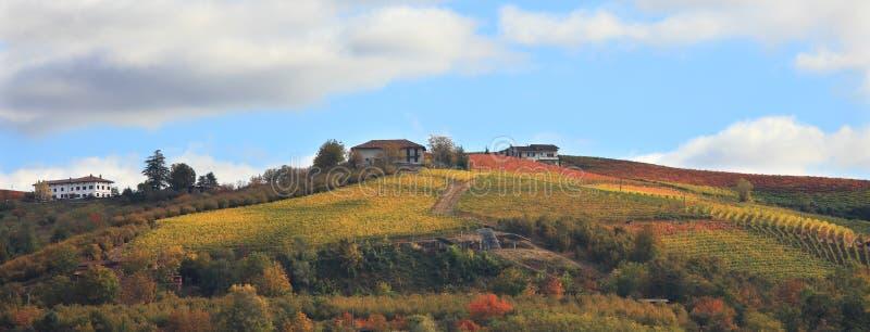 Collina della vigna alla caduta. Piemonte, Italia del Nord. immagine stock