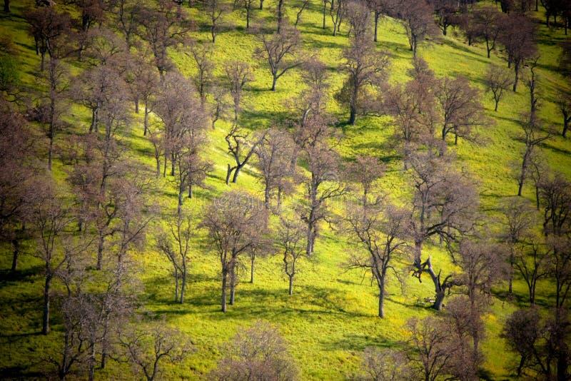 Collina ed alberi fotografie stock