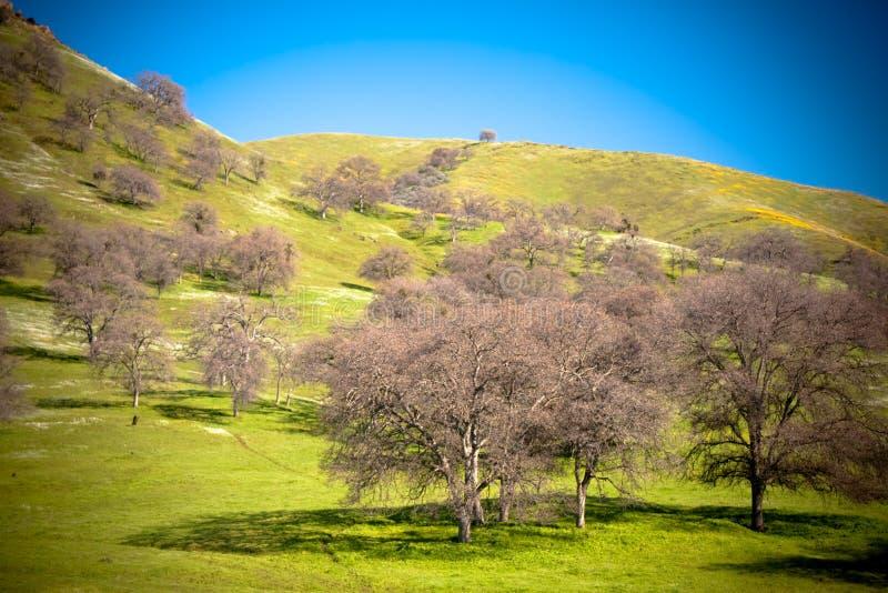 Collina ed alberi immagine stock libera da diritti