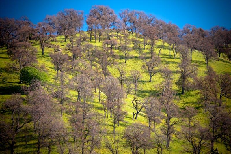 Collina ed alberi fotografia stock libera da diritti