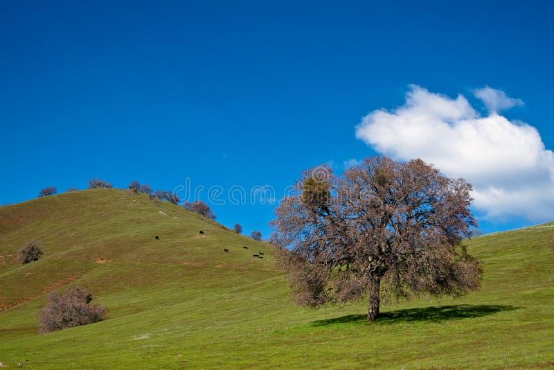 Collina ed albero immagine stock