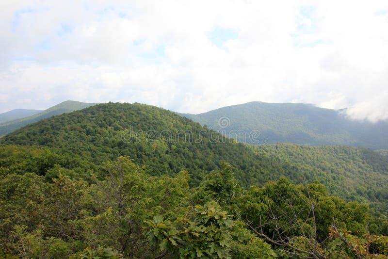Collina, foresta, paesaggio, natura della montagna immagine stock