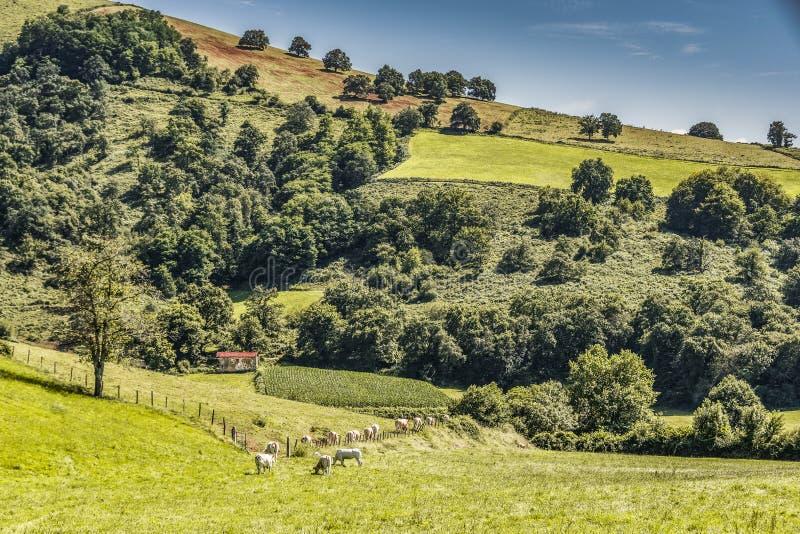 Collina in navarro francese i Pirenei Aquitaine Francia fotografia stock