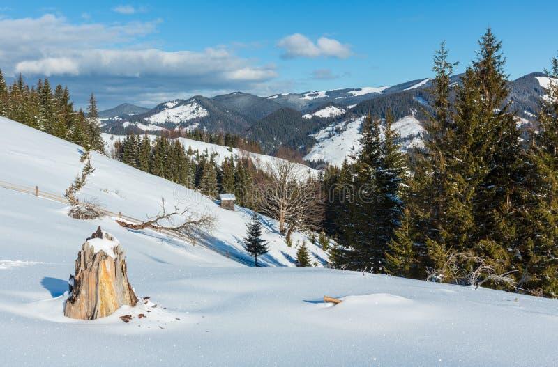 Collina pittoresca della montagna di mattina di inverno innevata ed i certi alberi frangivento e ceppo appassiti Ucraina, montagn fotografia stock libera da diritti
