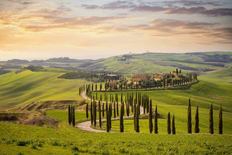 Collina toscana con la fila degli alberi di cipresso e delle fattorie al tramonto Paesaggio toscano L'Italia fotografie stock