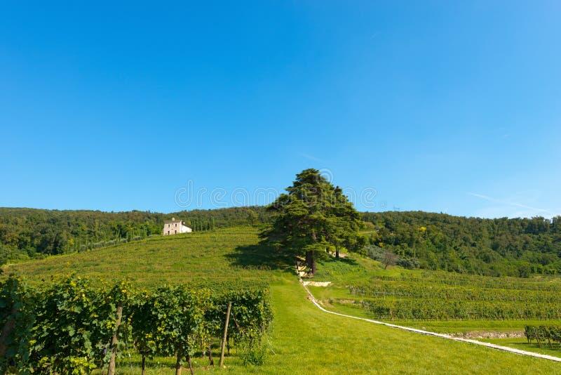 Colline con le vigne vicino a Verona - l'Italia immagine stock