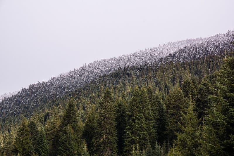 Colline couverte par forêt dans le svanetia images stock
