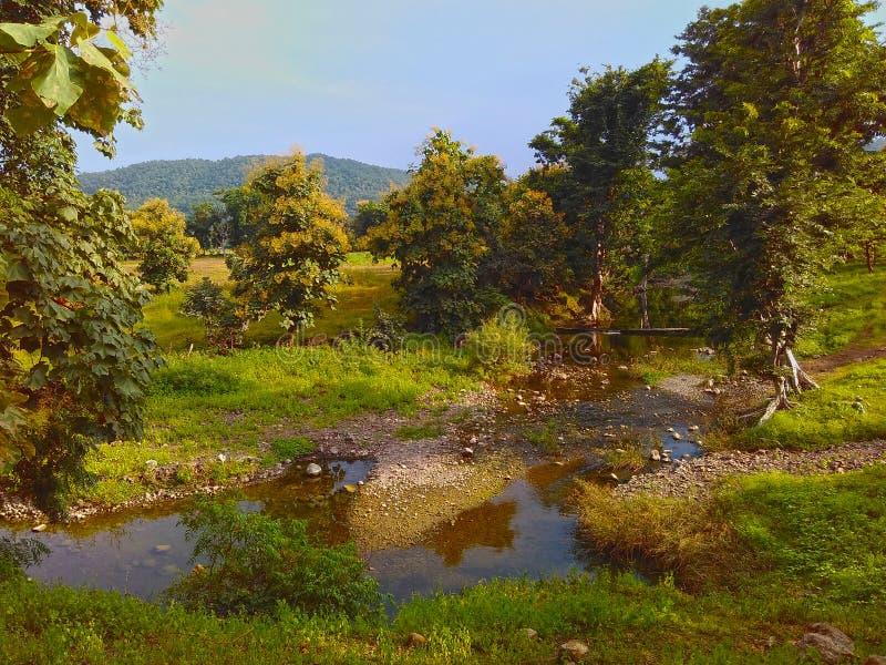 Colline d'arbres de courant de rivière de paysage photo libre de droits
