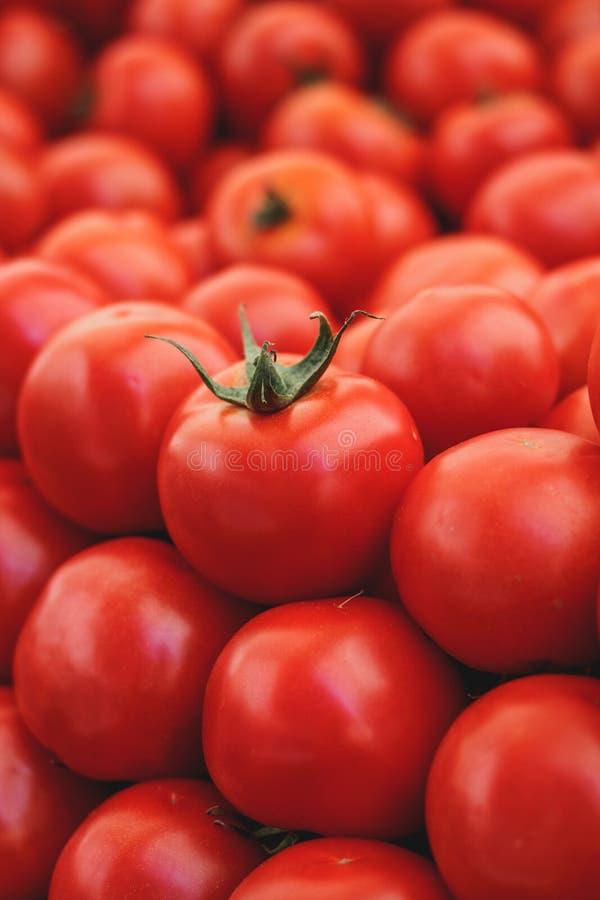 Colline dei pomodori fotografia stock libera da diritti