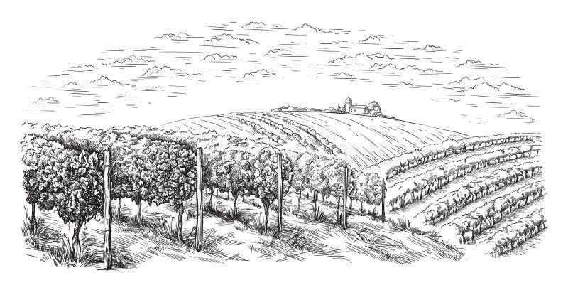 Colline della piantagione della vite, alberi, nuvole sull'orizzonte illustrazione vettoriale