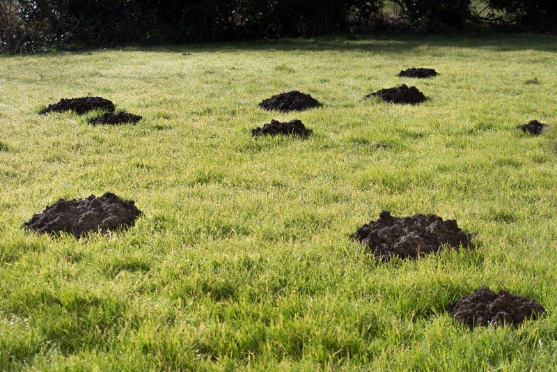 Colline della talpa nel prato inglese del giardino fotografie stock libere da diritti