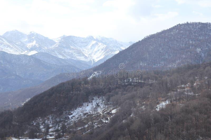 Colline delle foreste degli alberi della natura dei paesaggi delle montagne immagini stock libere da diritti
