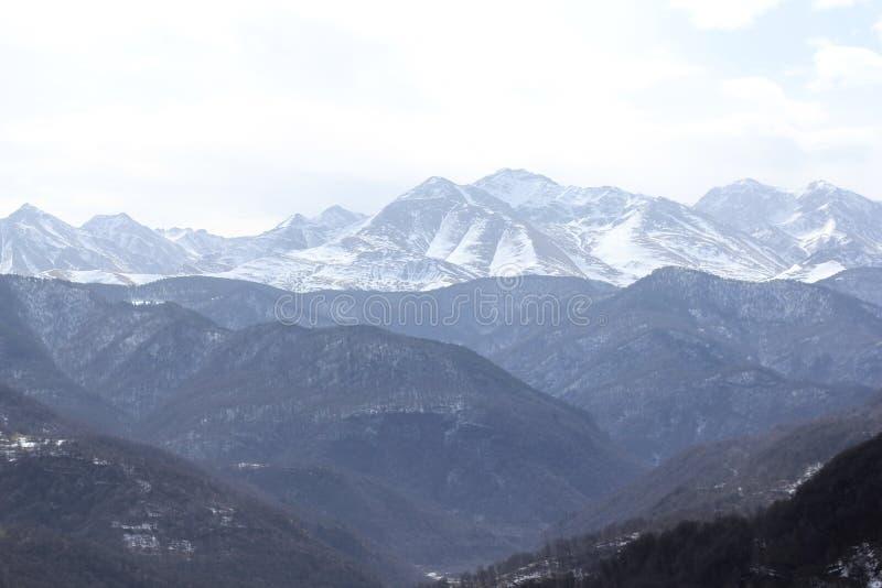 Colline delle foreste degli alberi della natura dei paesaggi delle montagne fotografie stock