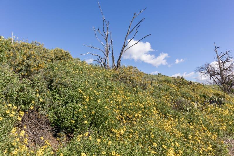 Colline des wildflowers contre le ciel bleu photographie stock