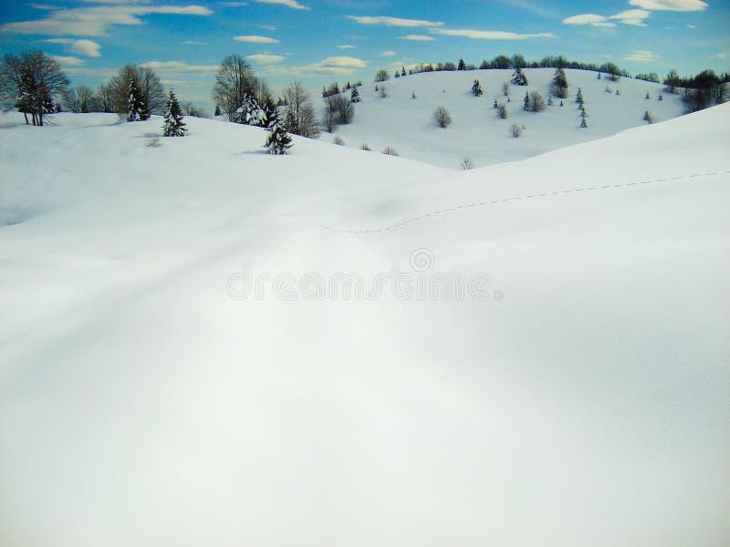 Colline di rotolamento liscie della neve con la singola traccia delle stampe del piede immagine stock