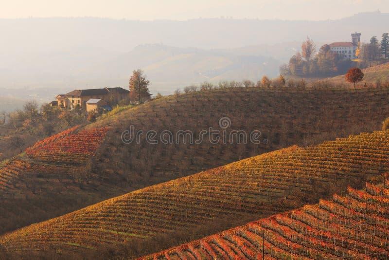 Colline e vigne alla caduta. Piemonte, Italia. immagini stock